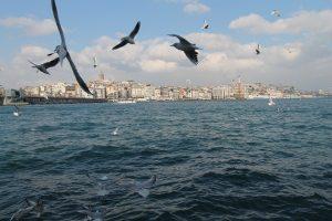 Istanbul - Möven vor der Skyline