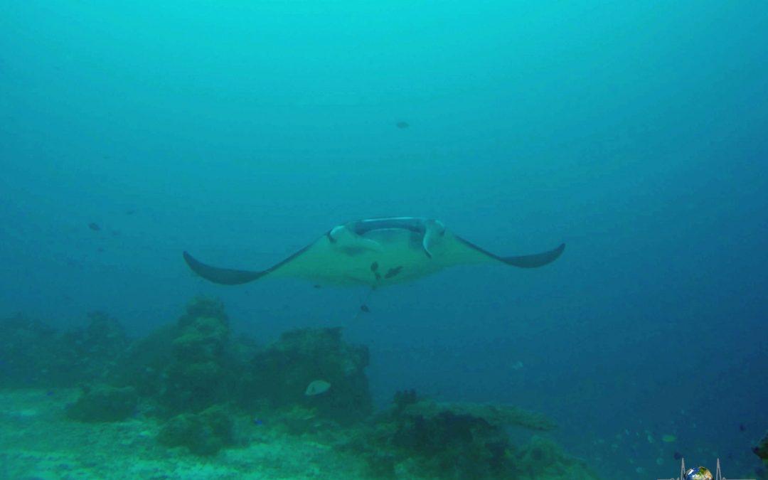 Tauchen in Palau – ein besonderes Erlebnis