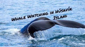 Whale Watching in Húsavík, Island (1)