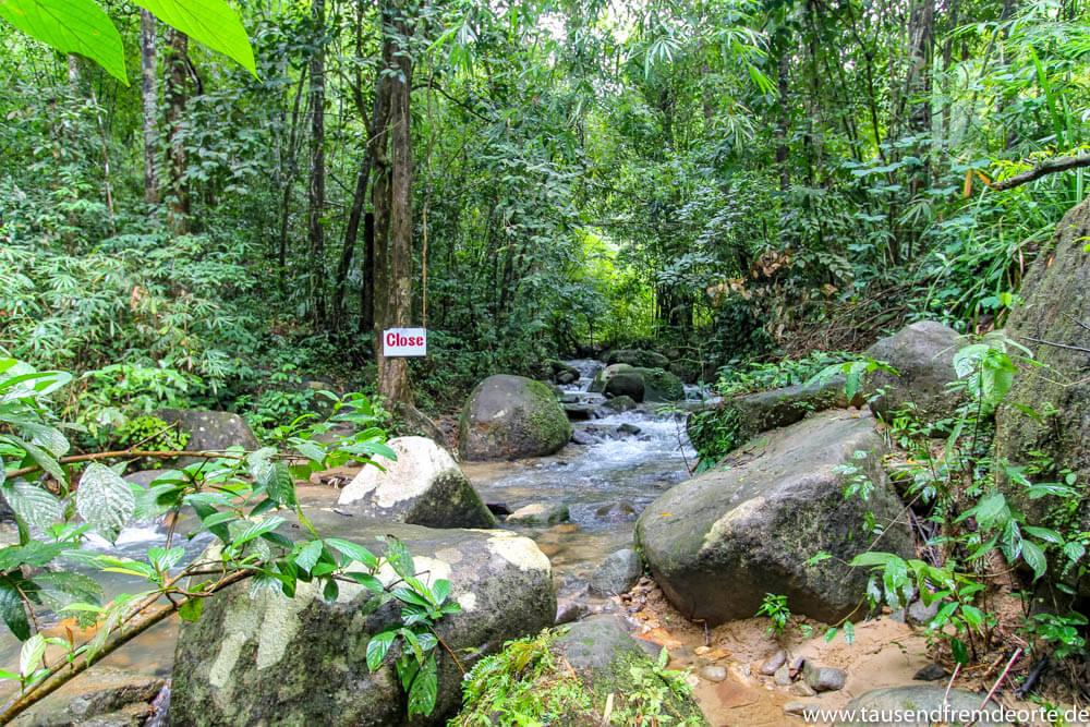 Urwald im Khao Sok Nationalpark