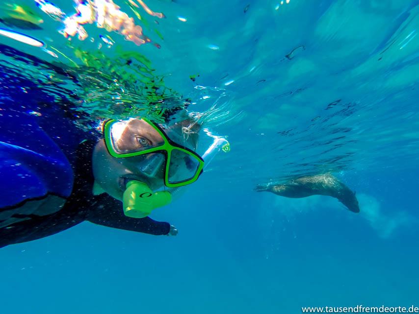 Schnorcheln mit Seehunden in Sorrento