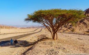 Straßen der Sinai Halbinsel