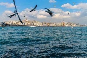 Tauben über dem Meer in Istanbul
