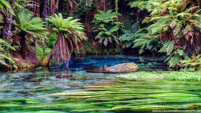 Blue Springs in Neuseeland
